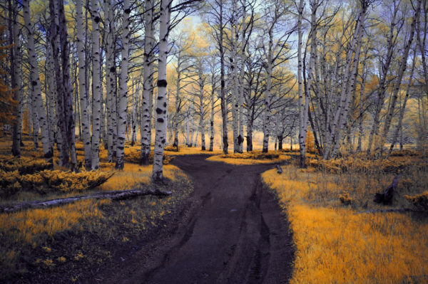 Forest in infrared