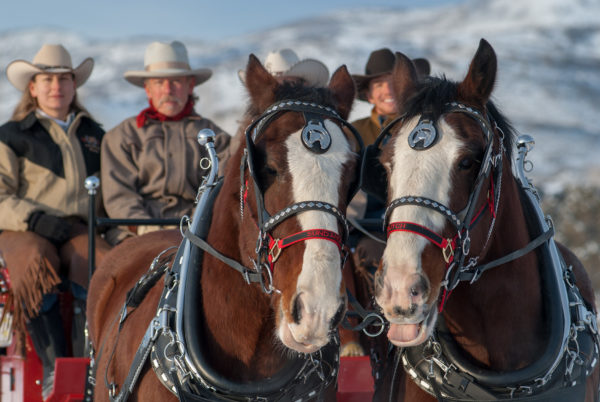 Horse and carriage event in Park City Utah
